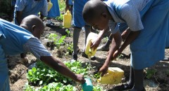 Students watering seedlings they are growing